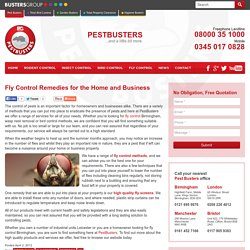 Best Remedies for Fly Control for your Home and Office