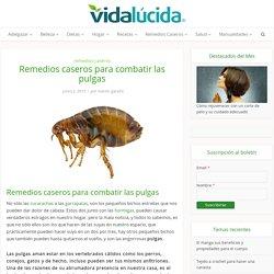 Remedios caseros para combatir las pulgas