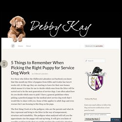 5 Things to Remember When Picking the Right Puppy for Service Dog Work « Chilbrook Labradors