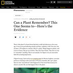 Can a Plant Remember? This One Seems to—Here's the Evidence – Phenomena: Curiously Krulwich