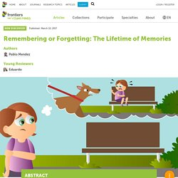 Remembering or Forgetting: The Lifetime of Memories