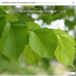 Remembering the Elm – Stories from the Museum Floor