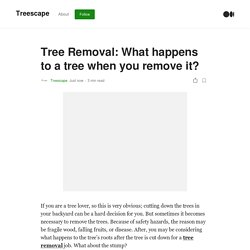 Tree Removal: What happens to a tree when you remove it?