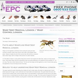 Wasp Nest Removal London / Wasp Control London - Empire Pest Control