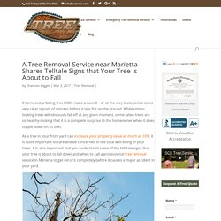 A Tree Removal Service near Marietta Shares Telltale Signs that Your Tree is About to Fall