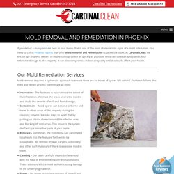 Proper Mold Remediation and Clean-up