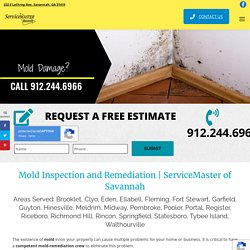 Mold Damage Repair and Removal Services