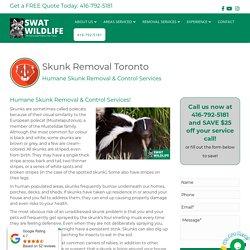 Skunk Removal & Control Services Toronto