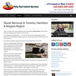 Skunk Removal in Toronto, Hamilton & Niagara Region