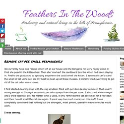 Remove cat pee smell permanently - Feathers in the woods