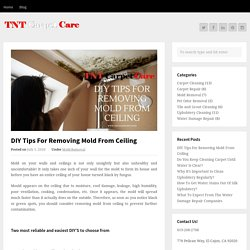 DIY Tips For Removing Mold From Ceiling By TNT Carpet CareTNT Carpet Care