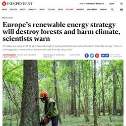 Europe's renewable energy strategy will destroy forests and harm climate, scientists warn