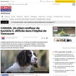 CANADA. Un chien renifleur de bactérie C. difficile dans l'hôpital de Vancouver