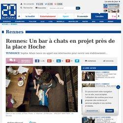 Rennes: Un bar à chats en projet près de la place Hoche