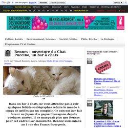 Rennes : ouverture du Chat Puccino, un bar à chats