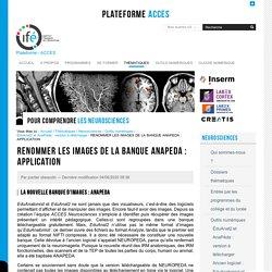 RENOMMER LES IMAGES DE LA BANQUE ANAPEDA : APPLICATION