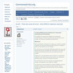 CommunautéSLA.org / Gène APOE4 et réparation neuronale