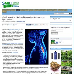 Smell the Truth » Worth repeating: National Cancer Institute says pot fights cancer