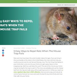 5 Easy Ways to Repel Rats When The Mouse Trap Fails - MDX Concepts
