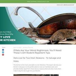 Natural Ways to Keep Rats Away - MDX Concepts
