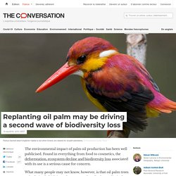 Replanting oil palm may be driving a second wave of biodiversity loss