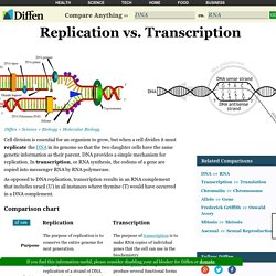 Replication vs Transcription