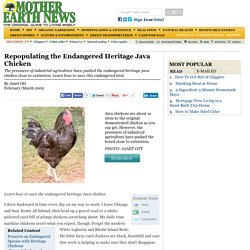 Repopulating the Endangered Heritage Java Chicken