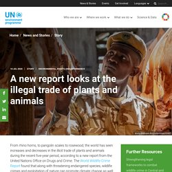 UNENVIRONMENT 10/07/20 A new report looks at the illegal trade of plants and animals