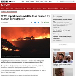 WWF report: Mass wildlife loss caused by human consumption
