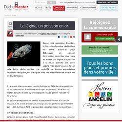 Reportage - La légine, un poisson en or - PêcheMaster