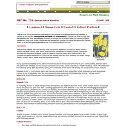 IPM : Reports on Plant Diseases : Orange Rust of Brambles