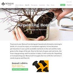 Repotting Bonsai, how to repot your tree - Bonsai Empire
