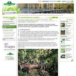 Des représentations ambivalentes de la forêt