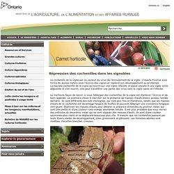 OMAFRA - MAI 2016 - Répression des cochenilles dans les vignobles