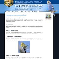 Reproduction chez la perruche ondulée-Les Perruches ondulées,psittacidé, oiseaux, alimentation, cage, maladie