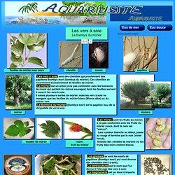 Culture,élevage,reproduction de vers à soie avec des feuilles de mûrier,chenilles,bombyx mori,photos,élever,dessin.