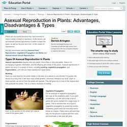 Asexual Reproduction in Plants: Advantages, Disadvantages & Types