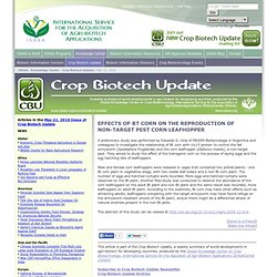 ISAAA 21/05/10 Effects of Bt Corn on the Reproduction of Non-target Pest Corn Leafhopper