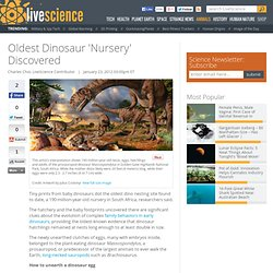 Dinosaur Reproduction & Dinosaur Family Behaviors