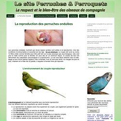 Reproduction et évolution - Perruches et perroquets