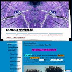 Reproduction sexuée des EV - le site de M.MULLER