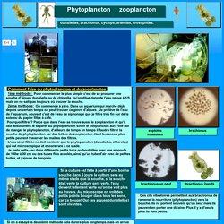 cultures,elevages,reproductions de phytoplancton,zooplancton,plancton,dunaliellas,brachionus,cyclops,artemias,drosophiles et infusoires.
