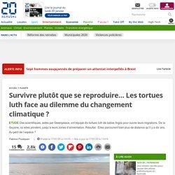 Survivre plutôt que se reproduire… Les tortues luth face au dilemme du changement climatique?
