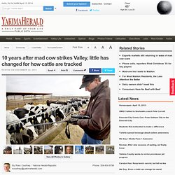 10 years after mad cow strikes Valley, little has changed for how cattle are tracked