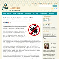 Cistus Tea, or: How to become repulsive to ticks - Fran Sussman Holistic Services- Fran Sussman Holistic Services