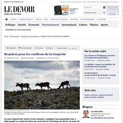 Requiem pour les caribous de la Gaspésie