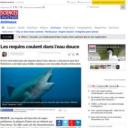 Les requins coulent dans l'eau douce