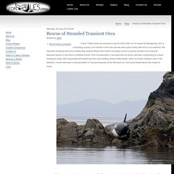 Rescue of Stranded Transient Orca