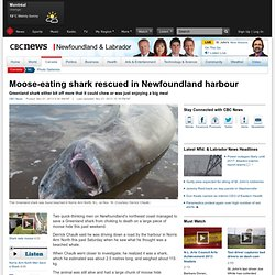 Moose-eating shark rescued by Canadians