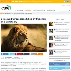 2 Rescued Circus Lions Killed By Poachers At A Sanctuary